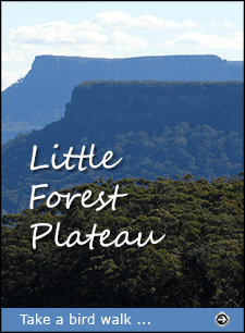 Click for a description of the bird walk on Little Forest Plateau