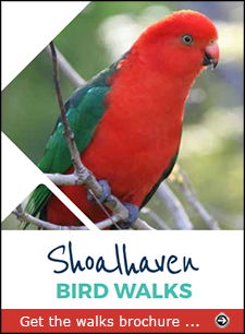 Download the Shoalhaven Bird Walks brochure